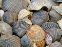 Конец вверх различного моллюска нашел на Средиземном море стоковые фото