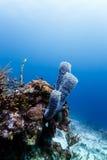 Конец-вверх разнообразие губок коралла и вазы на коралловом рифе в Белизе Стоковые Фото