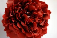 Конец-вверх роз красного бутона искусственных Стоковое Фото
