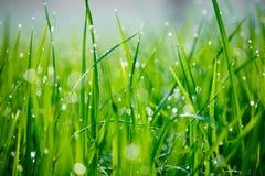Конец-вверх росы утра на зеленой траве стоковое изображение rf