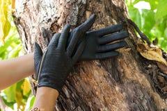 Конец-вверх рук женщины с роскошными перчатками snakeskin питона на деревянной предпосылке природы на тропическом острове Бали, И Стоковая Фотография RF