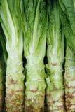 Салат стержня стоковое фото
