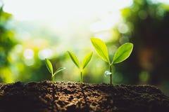 Конец-Вверх свежий расти зеленого растения, штриховки роста дерева в природе и красивое освещение утра стоковые фото