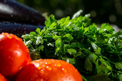 Конец-вверх свежих, зрелых томатов, баклажана и петрушки белизна группы калибра 22 пуль Стоковые Фото