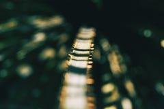 Конец-вверх светлых нашивок в лист завода стоковое фото