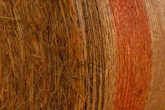 Конец-вверх связки сена цилиндрической в поле Стоковые Изображения