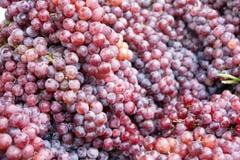 Конец-вверх связок винограда Стоковые Изображения RF