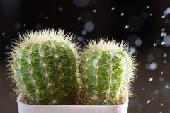 Конец-вверх селективного фокуса снял на кактусе с падениями Стоковое Изображение RF