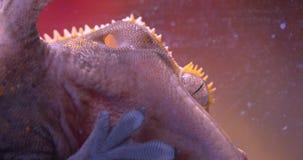 Конец-вверх снятый в профиле зеленой лягушки держа на стекле аквариума спокойно и дыша глубоко в terrarium акции видеоматериалы