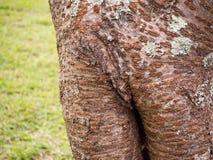 Конец-вверх ствола дерева Стоковое Изображение
