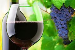 Красное вино и виноградины Стоковое фото RF