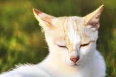 Конец-вверх стороны кота Стоковое Изображение RF
