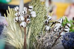Конец-вверх творческих букетов высушенных цветков с высушенной ветвью хлопчатника или стержня хлопка с пушистыми белыми шариками  Стоковые Изображения RF