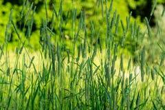 Конец-вверх травы стоковые изображения