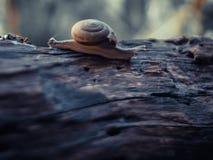 Конец-вверх улитки, макрос на старой деревенской деревянной природе стоковая фотография rf
