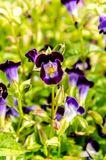 Конец-Вверх фиолета покрашенный на предпосылке поля цветка стоковое фото