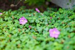 Конец вверх фиолетового цветка стоковая фотография rf