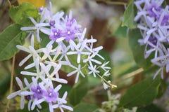Конец-вверх фиолетовых цветков Стоковое Изображение
