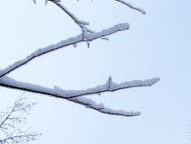 Конец-вверх хворостин покрытых фото лед-запаса Стоковое фото RF