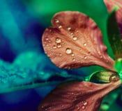 Конец-вверх цветка первоначально славный яркий Стоковые Фото