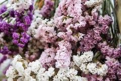 Конец-вверх цветков Statice Стоковые Изображения RF
