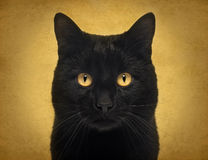 Конец-вверх черного кота смотря камеру Стоковые Изображения