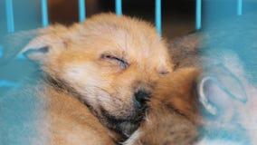Конец-вверх щенка спать в укрытии за загородкой ждать быть спасенным и принятым к новому дому Укрытие для животных акции видеоматериалы