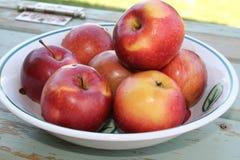 Конец-вверх яблок Стоковое Изображение RF