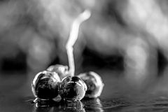 Конец-вверх, ягоды темной связки винограда в изолированном нижнем свете Стоковое фото RF