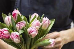 Конец-вверх яркого букета на руках ` s флориста тюльпаны букета розовые Стоковая Фотография RF