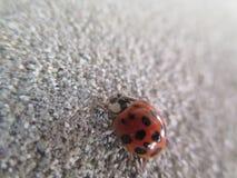 Конец-вверх Ladybird на стене стоковое фото rf