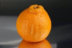 Конец-вверх reticulata цитруса апельсина мандарина Sumo Стоковое Изображение