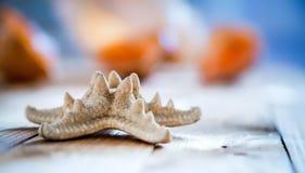 Конец-вверх seashell морских звёзд на старой деревянной доске Стоковые Фотографии RF