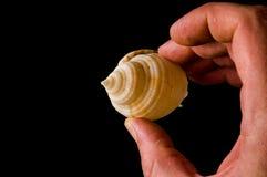 Конец-вверх seashell раковины Стоковое Изображение