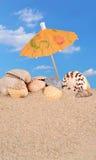 Конец-вверх Seashells на песке пляжа Стоковое Фото