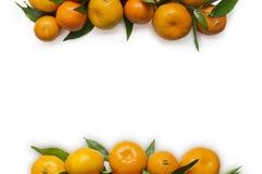 Конец-вверх Tangerines на белой предпосылке Стоковое Изображение RF