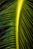 конец выходит пальма вверх стоковые фотографии rf