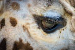 Конец глаза жирафа вверх Стоковое Фото