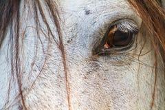 Конец глаза лошади вверх в светлом тоновом изображении Стоковые Фотографии RF
