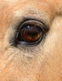 Конец глаза лошади вверх Стоковое Изображение RF