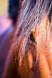 Конец глаза лошади залива вверх стоковое фото