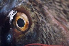 Конец глаза рыб вверх Стоковое Фото