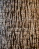 Конец дерева пальмы вверх Стоковое Изображение RF