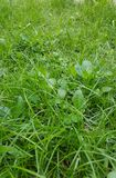 Конец детали лужайки зеленой травы вверх Стоковые Изображения RF
