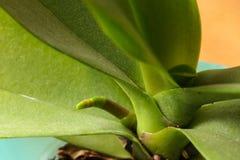 Конец зеленого растения вверх Стоковые Фотографии RF