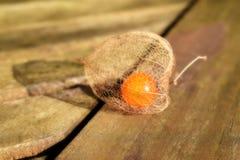 Конец земной вишни физалиса вверх по предпосылке на таблице Стоковая Фотография RF