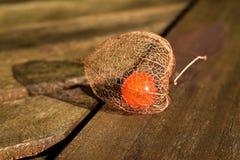 Конец земной вишни физалиса вверх по предпосылке на таблице Стоковые Изображения RF