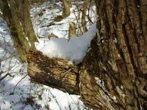 Конец зимы Стоковая Фотография