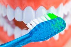 Конец зубной щетки зубов вверх Стоковые Фото