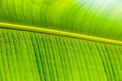 Конец листьев ладони вверх Стоковая Фотография RF